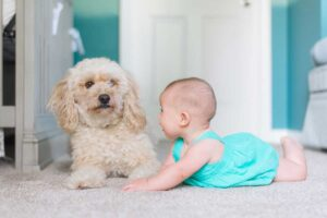 How-to-Get-Dog-Pee-Out-of-Carpet---Method-to-Remove-the-Odor